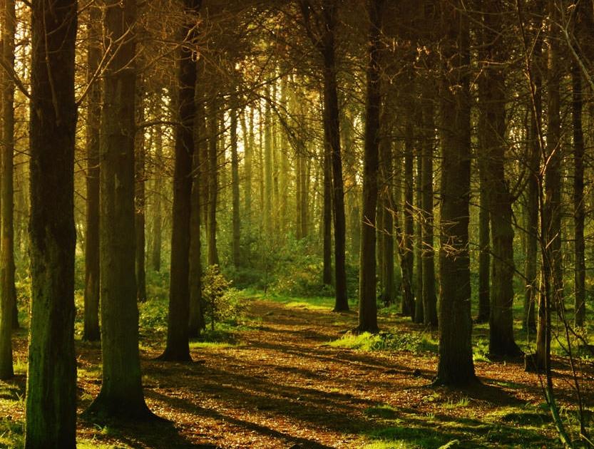 aamuvalo metsässä pitkät varjot