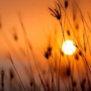 auringonlasku heiniä etualalla