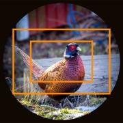 täyden koon kamera piirtää kaiken mikä tulee optiikan läpi