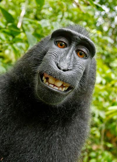 apinan oikeus selfiekuvaan