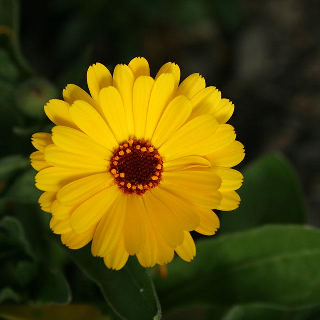 kukkakuva 100ISO