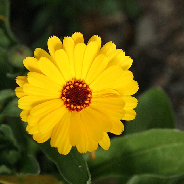 kukka kuva 1600 ISO